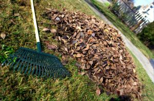 1024px-Leaf_rake_and_leaves