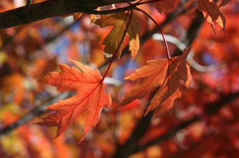 Fall Leaves by Vikki LeBlanc Yost